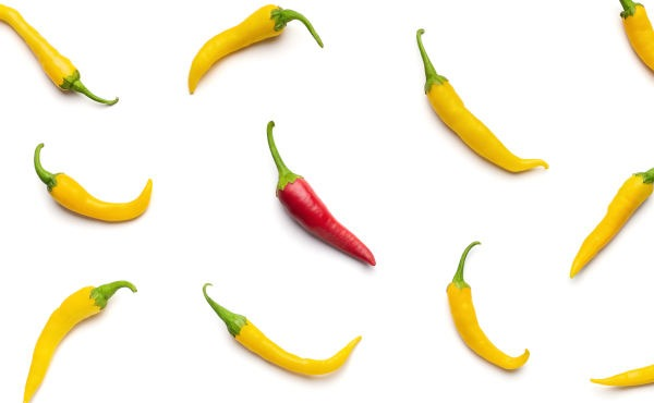 One Red Chilli Pepper Among Yellow On White Background.